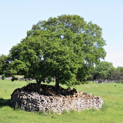 Dry stone walls in the Valle d\'Itria, ecological and landscape heritage
